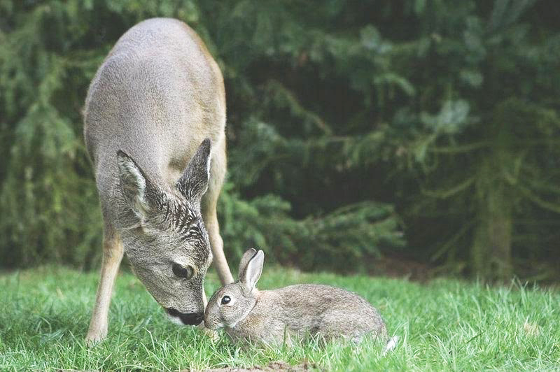 Bambi-and-bunny